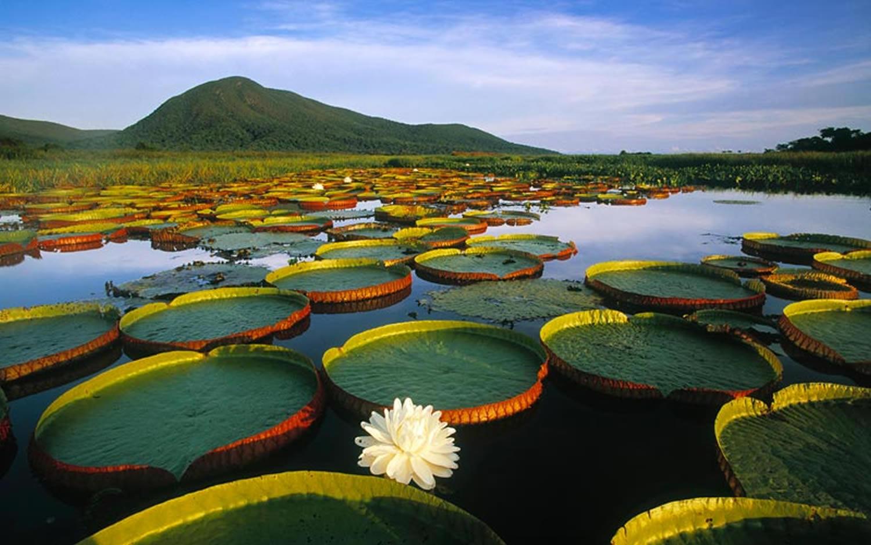 Pantanal-brasile