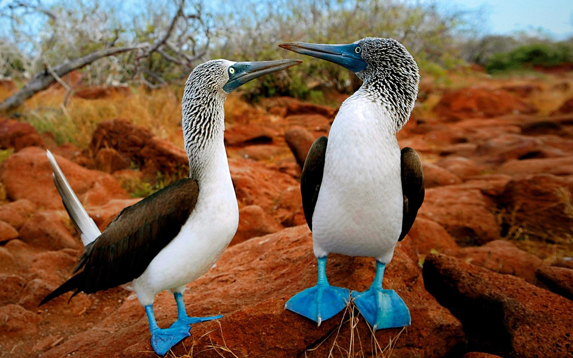 galapagos un viaggio di nozze nella natura 2