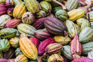 La-costa-del-cacao